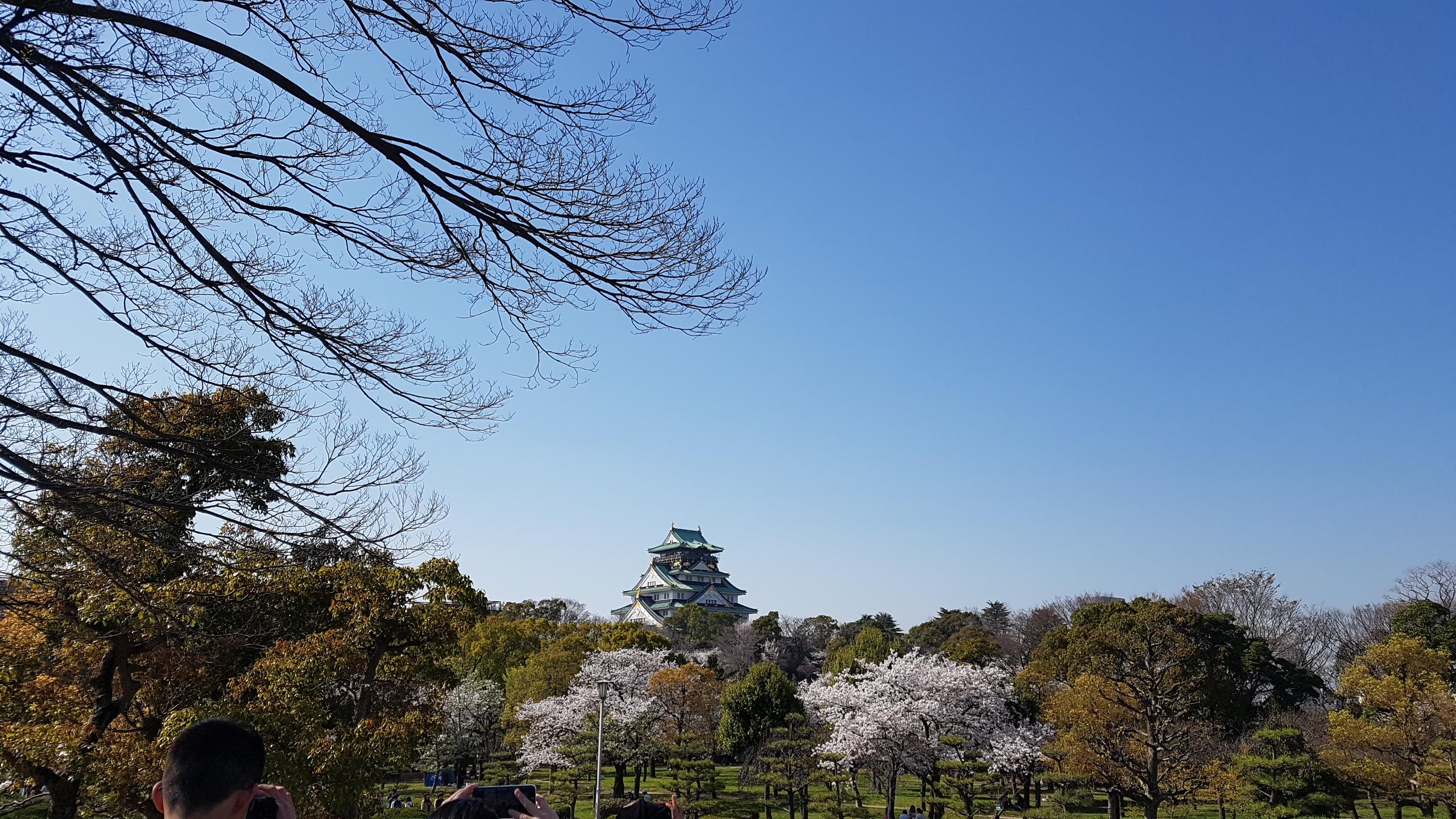春の大阪城4