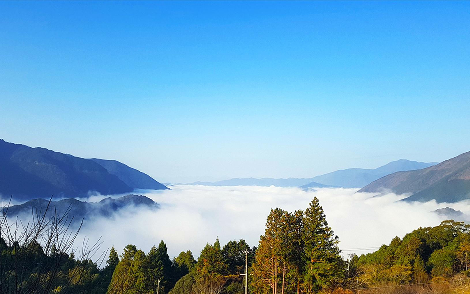 丸山千枚田の雲海