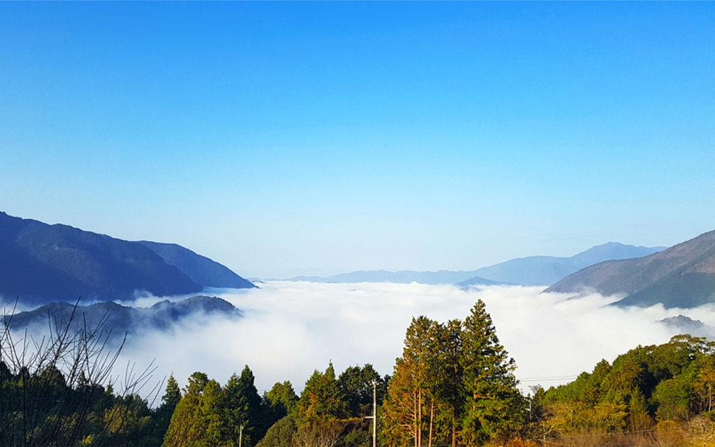 丸山千枚田(三重県)